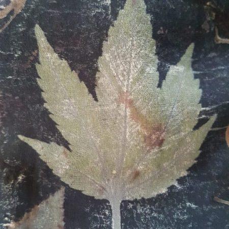 Cannabis ecoprinting artist